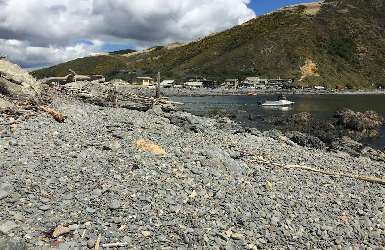 Favourite Places: Exploring Makara Walkway with Welly Walks