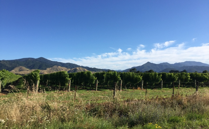 Touring Marlborough Vineyards: South Island, NewZealand